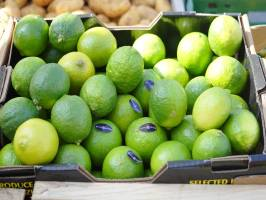 Invest in Panama Limes