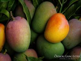 Invest In Agriculture: Mangos, Farmland, Fruits