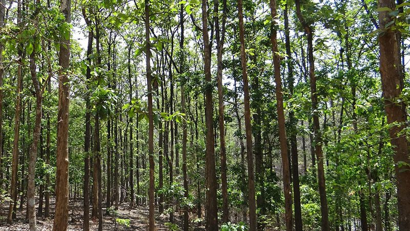 Timber Investment In Colombia A Big Play In 2016