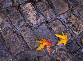 Brightly colored fall leaves ona cobblestone road in Paris