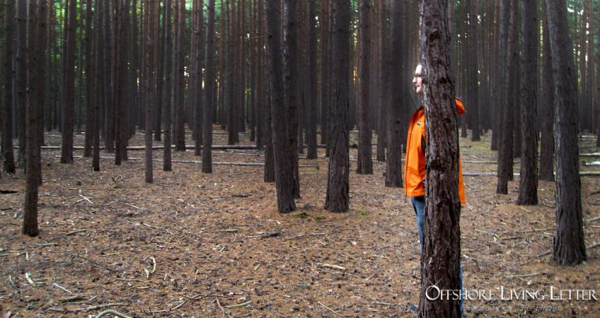 Man in Bright Orange Jacket Hiding Behind A Tree
