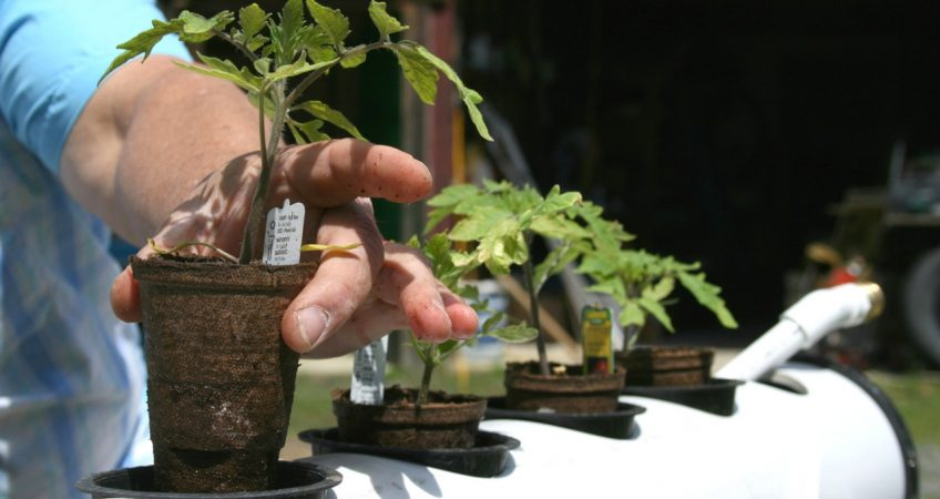 Aquaponics Investment In Thailand Showing Major Progress