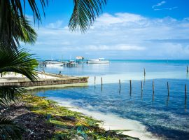 Blue water beach with palm trees in Caye Caulker, Belize