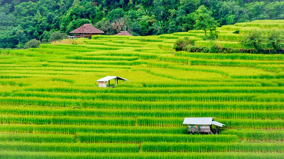 thailand agriculture
