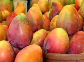 orange mangos in a basket