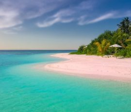 beach coast coconut trees