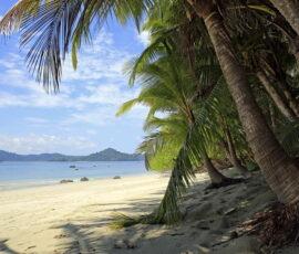 tropical beach palm trees in panama