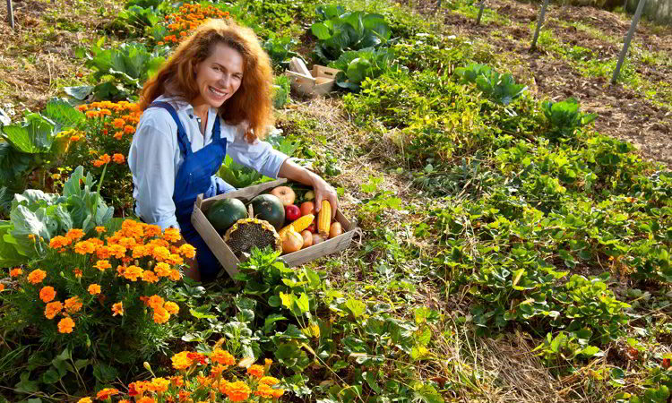 A woman in a blue jumpsuit collects vegetables in the garden.