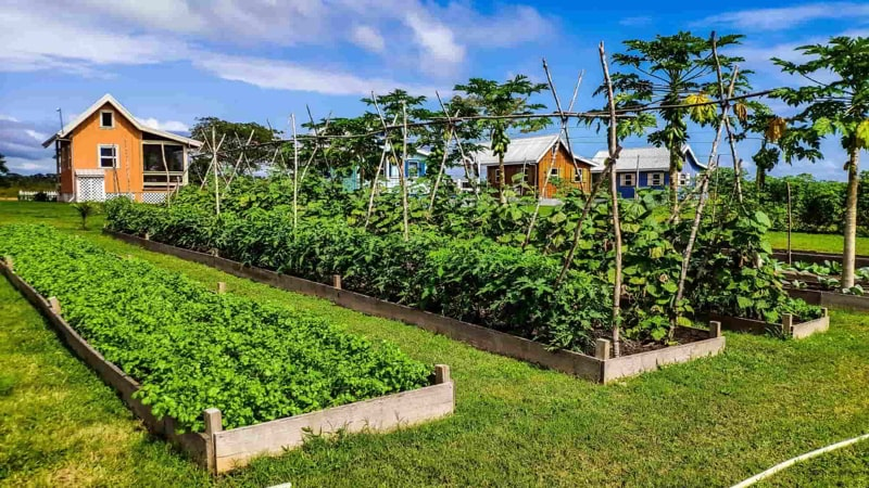 Carmelita Gardens, a sustainable tiny home community in Belize